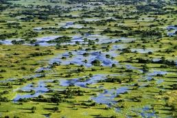 Palm islands (aerial), Okavango Delta, Botswana Location: Botswana, Landscape ©Frans Lanting/www.lanting.com