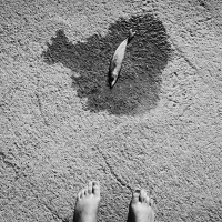 """María Juárez: """"El árbol"""""""