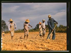 Fotógrafo: Jack Delano. Campesinos desbrozando el suelo para plantar algodón en un terreno alquilado cerca de White Plains, Greene County, Georgia. Junio de 1941. LC-USF35-599