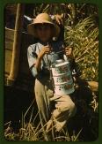 Fotógrafo: Jack Delano. Hijo de uno de los trabajadores del proyecto de la Farm Security Administration en Río Piedras (Puerto Rico). Trae el almuerzo a su padre, que trabaja en la plantación de caña de azúcar. Enero de 1942. LC-USF35-432