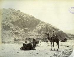 Felice Beato. 1884/85. Camellos llevando agua a las tropas en Tambouk. COPY 1/373/391