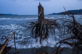 """3rd Prize General News Stories. Daniel Berehulak, Australia, Getty Images. """"Japón después de la ola"""". 07 de marzo de 2012, Rikuzentakata, Japan. Pinos arrancados por el tsunami yacen diseminados por la playa. Un año después, algunas de las zonas de Japón más afectadas por el terremoto y el tsunami, que dejaron 15,848 muertos 3,305 desaparecidos, continúan conmocionadas. Miles de personas aún viven en alojamientos temporales."""