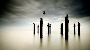 Sentinels. © Paulo Dias