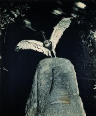 "Fauna series: (series created together with Pere Formiguera) ""Cercopithecus icarocornu"", 1987 © Joan Fontcuberta & Pere Formiguera"